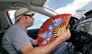 chollo parasol 4