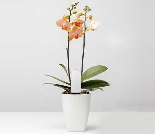 xiaomi-mi-plant-flower-tester-barato