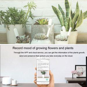 xiaomi-mi-plant-flower-tester-oferta