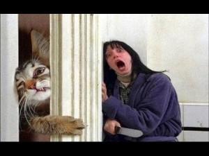 gato furioso