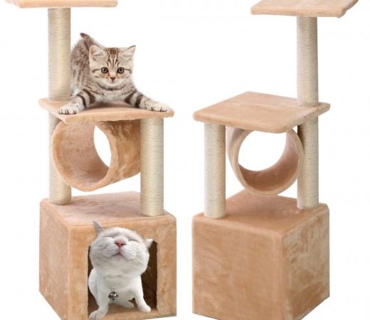 chollo gato 1