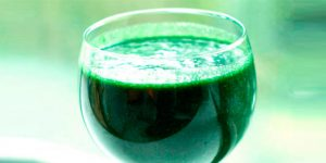 chollo spirulina 2