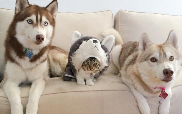 chollo vitamias mascotas 3
