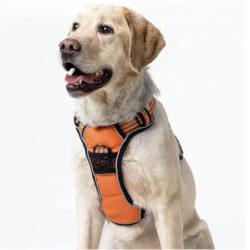 Arnés ajustable para perros, antitirones, impermeable por 7,99€ antes 19,99€.